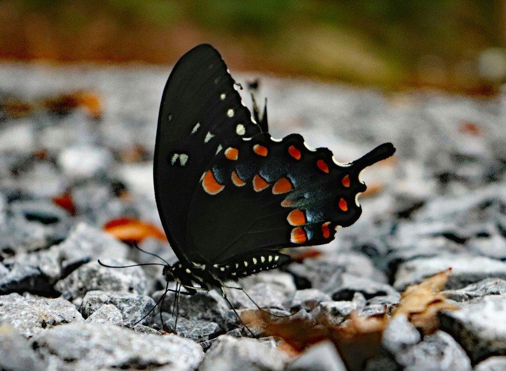 Cherokee National Forest: 2800 Ocoee St N, Cleveland, TN