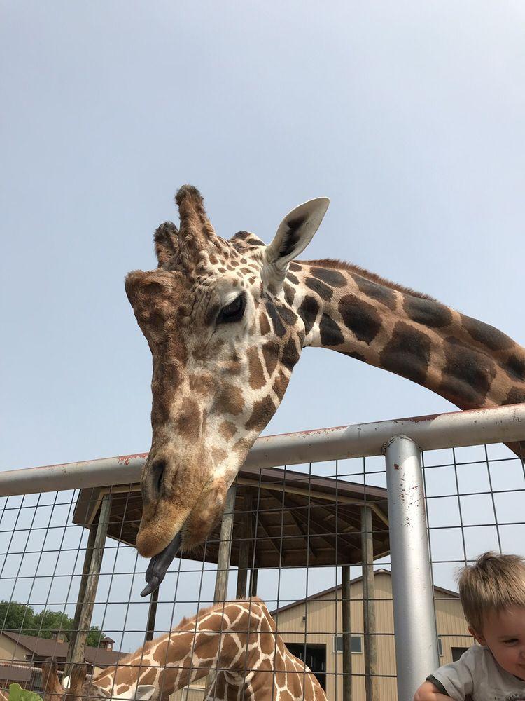 Boulder Ridge Wild Animal Park: 8313 Pratt Lake, Alto, MI