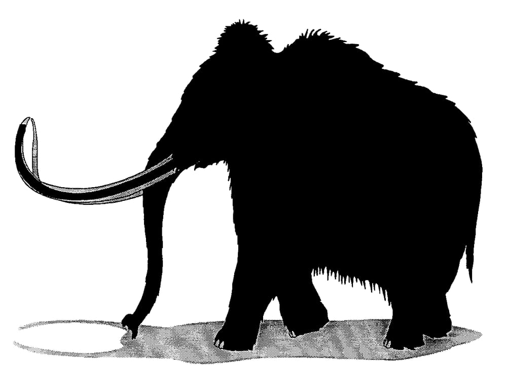 Mammoth Office Furniture Liquidators