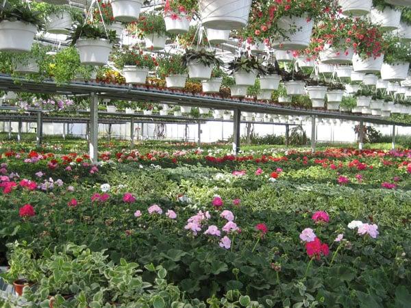 Merveilleux Photo Of Cedar Grove Garden Center   Cedar Grove, NJ, United States