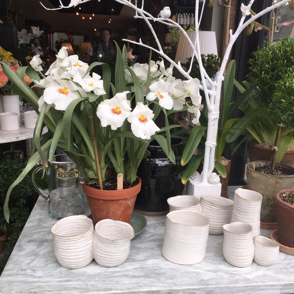 Toadflax Inc 15 Reviews Florists 5500 Walnut St Shadyside