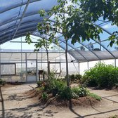 Photo Of Butterfly Farms   Encinitas, CA, United States. My Daughter Loved  Looking