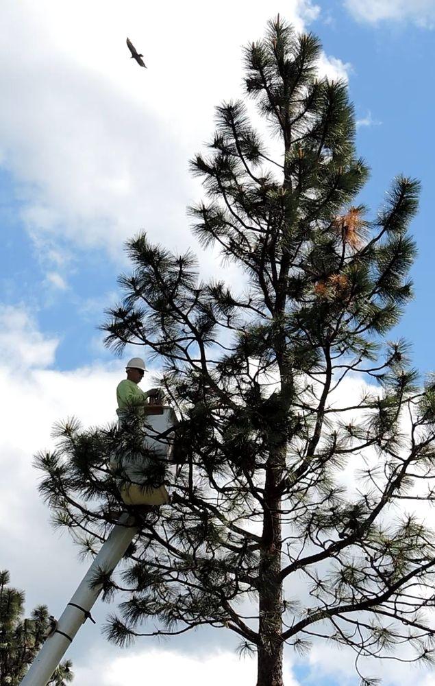 Elite Rigging Tree Trimming: 5639 Woodland Dr, Yreka, CA