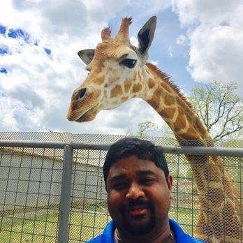 Zoo gentry ar