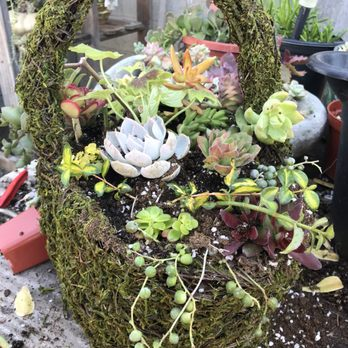 Photo Of Heavenly Vintage Nursery Fountain Valley Ca United States Beautiful Succulents