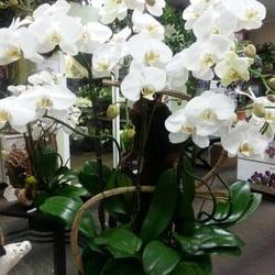 Photo of Arrowhead Flowers - Glendale, AZ, United States. Orchid Garden