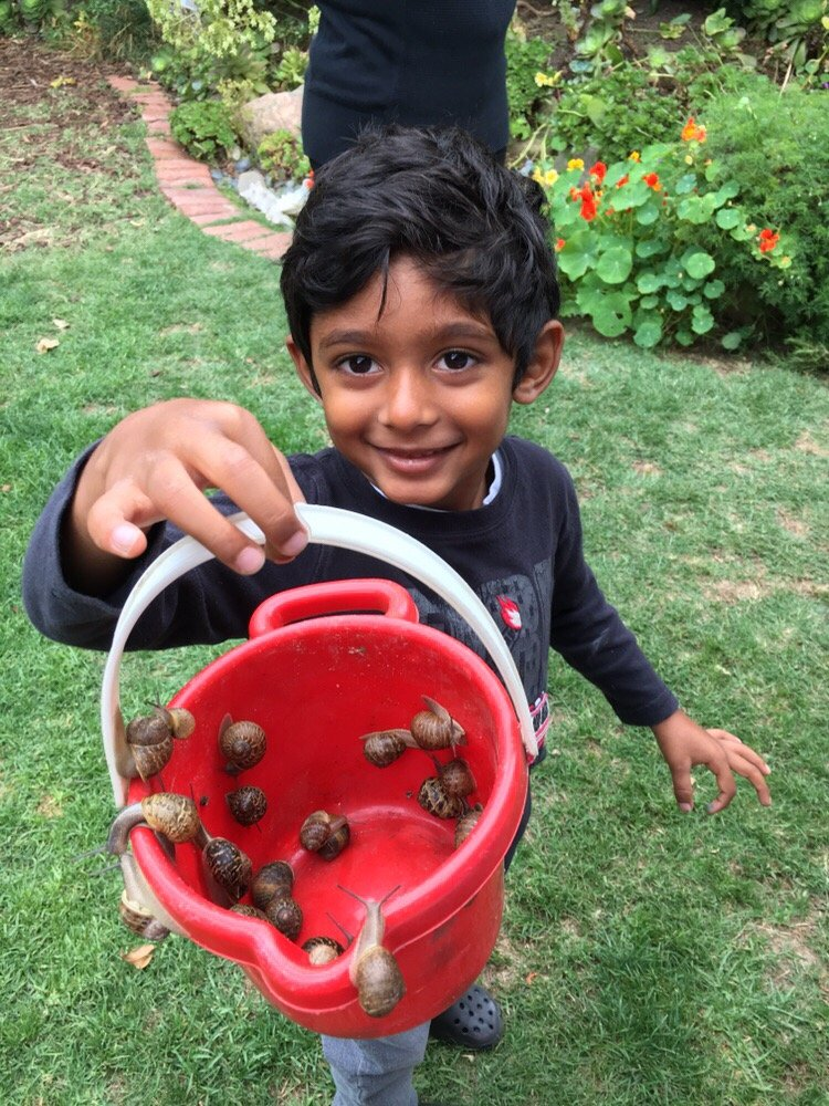 rose city cooperative preschool collecting snails in our organic garden yelp 602