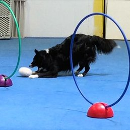 Good Sports Dog Training - 12 Photos - Pet Training - 12