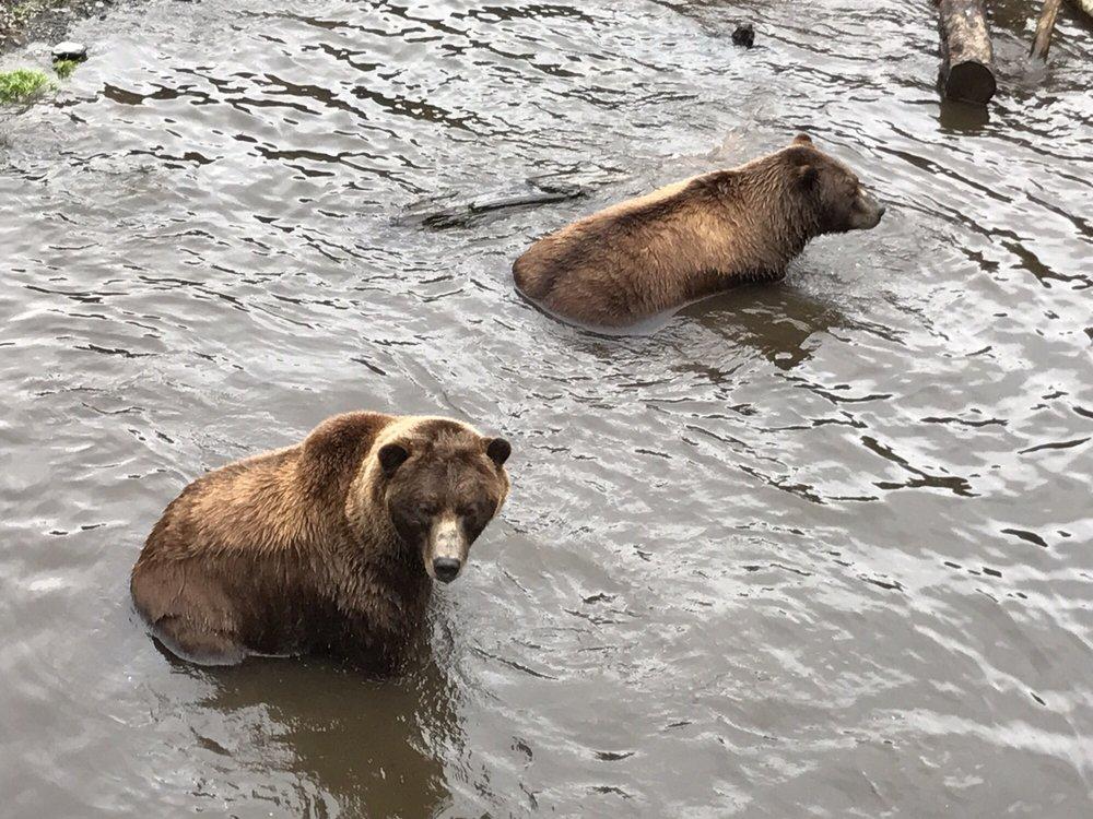 Fortress of the Bear: 4639 Sawmill Creek Rd, Sitka, AK