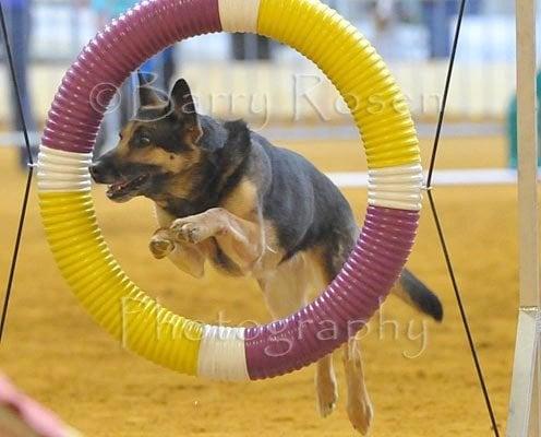 Puppy-Wuppy: 4 Fox Hollow Way, Andover, NJ