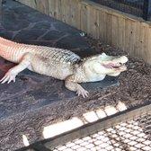 Alligator Adventure Hours Myrtle Beach Sc