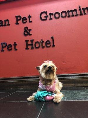 European Pet Grooming Salon & Boarding