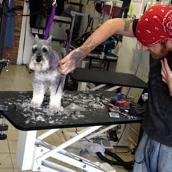 Tlc grooming clintonville 94 photos 32 reviews pet groomers photo of tlc grooming clintonville columbus oh united states christian grooming a solutioingenieria Gallery