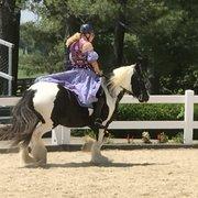Kentucky Horse Park - 296 Photos & 100 Reviews - Parks - 4089 Iron