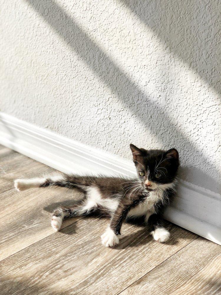 Furkids Headquarters & Cat Shelter