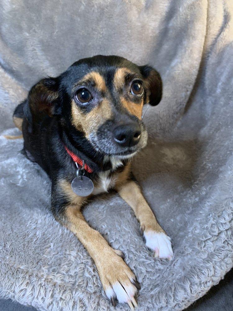 Westheimer Animal Clinic Bellaire: 7005 Mapleridge St, Bellaire, TX