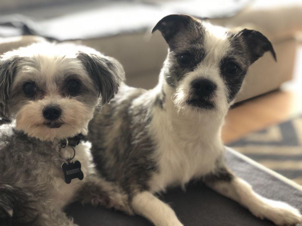 Lucky Dawg Salon Pet Services