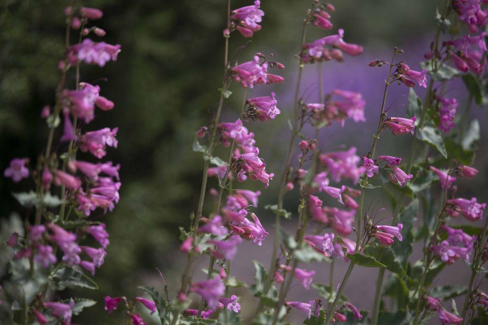 Orton Botanical Garden: 867 Filer Ave W, Twin Falls, ID