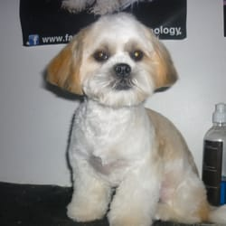 Dog Grooming Offers Dublin