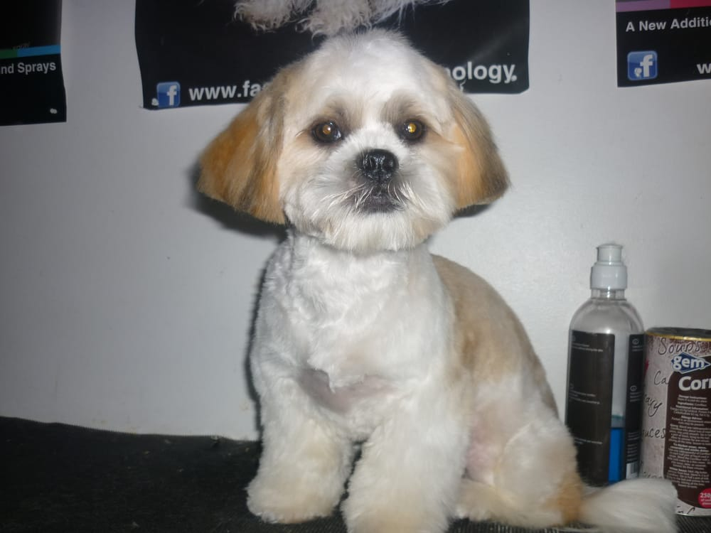 Puppy Cuts Dog Grooming D15 Pet Groomers 31 Limelawn Wood