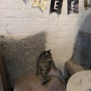 Pounce Cat Treats Review