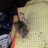 Superbe Photo Of Amazing Storage   Lafayette, LA, United States. Dead Mouse On Some