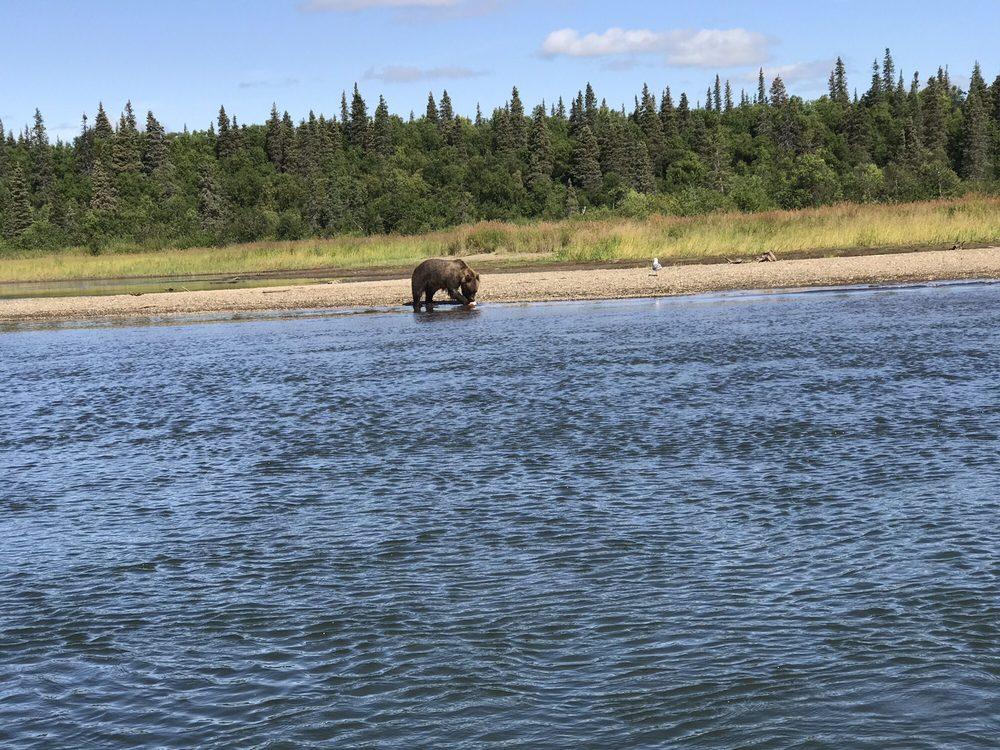 Katmai Adventure Lodge: 1000 Rapids Camp Rd, King Salmon, AK