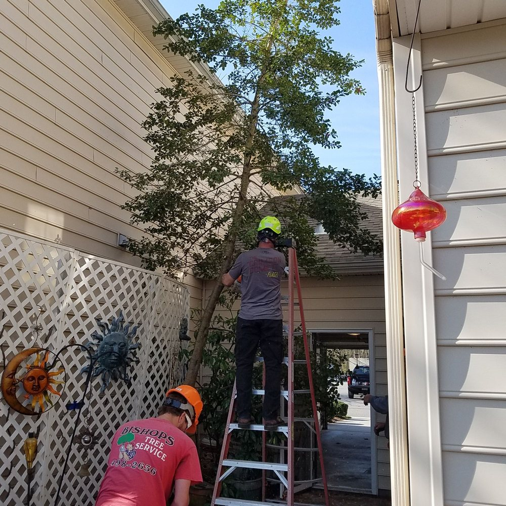 Bishops Tree Service