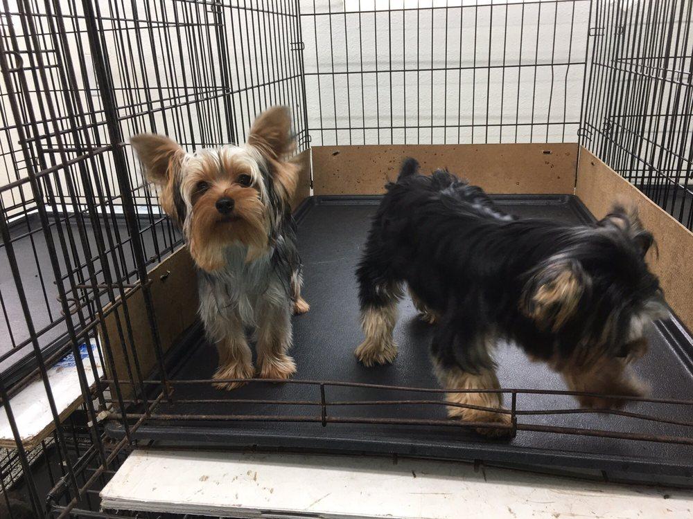 Adorable Dog Resort: 1560 Fm 3433, Newark, TX
