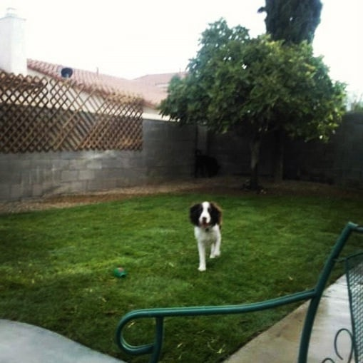 Vip Landscaping And Lawn Care 18 Photos Amp 16 Reviews