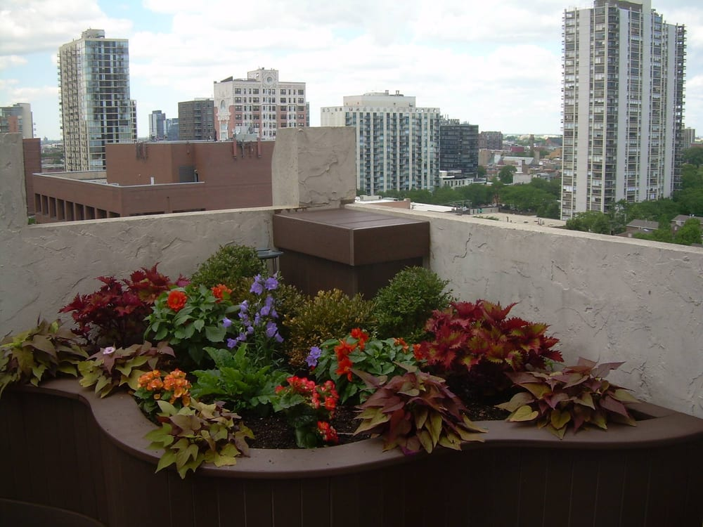 The Garden Gal: Irving Park & 4000 N Monticello, Chicago, IL