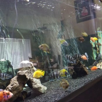 405 tropical fish 46 photos 138 reviews local fish for 405 tropical fish