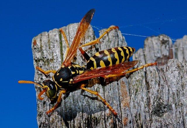 All Star Pest Control: 14578 SW 210th St, Rose Hill, KS
