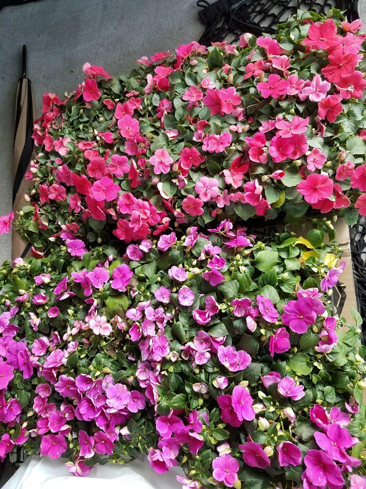 Vennix Greenhouse: 1175 W Ridge Rd, Essexville, MI