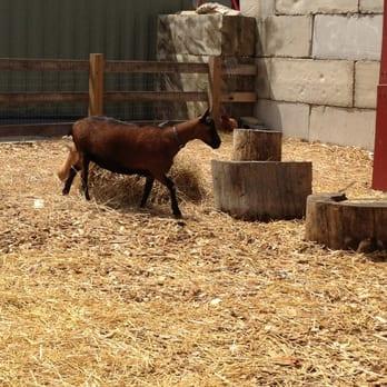Photo Of Merrifield Garden Center   Gainesville, VA, United States. They  Have Goats