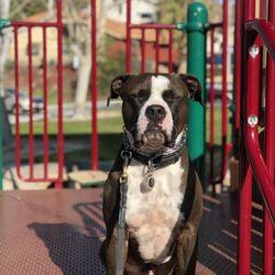 b33c666f9805e Lucky K9s - 16 Photos   22 Reviews - Pet Training - Santa Clarita ...