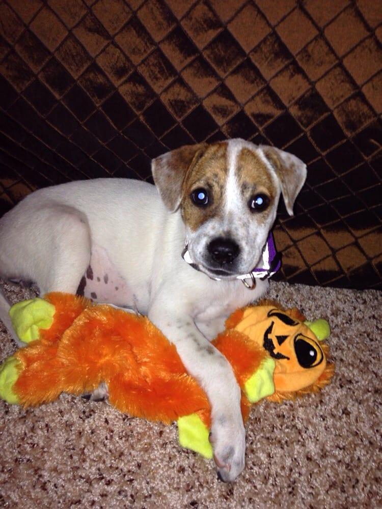 San Antonio Pets Alive Pet Adoption San Antonio Tx Yelp