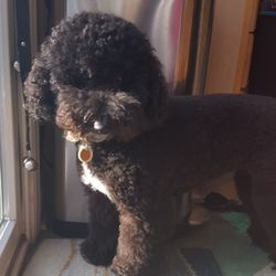Canine Design - 16 Photos & 26 Reviews - Pet Groomers - 4226