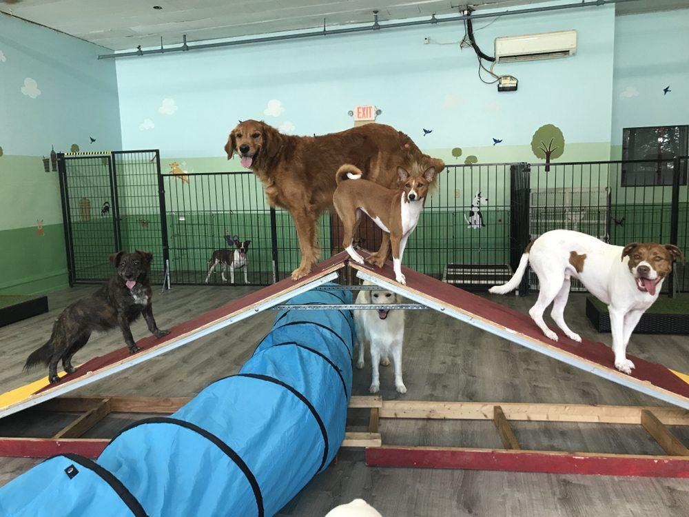 Strut Your Pup: 72 68th St, Guttenberg, NJ
