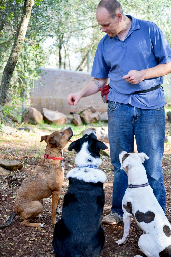 Canine Constitutional: Lower Lake, CA