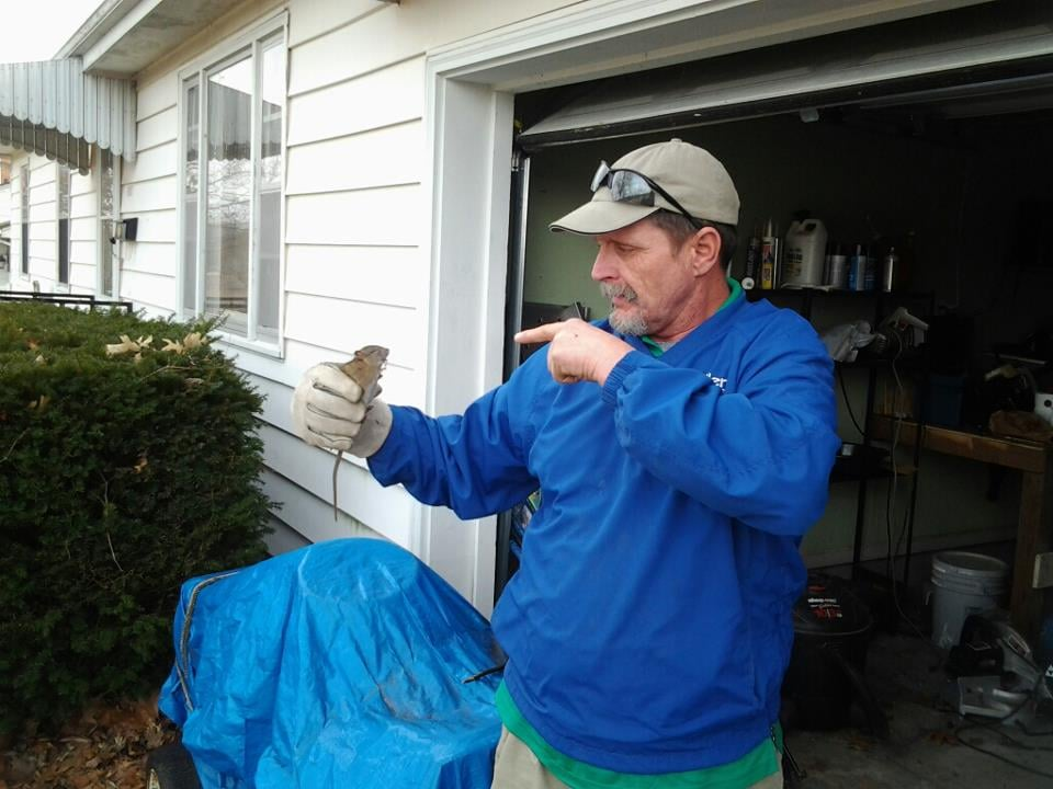 Keller Pest Control: 1304 S Commercial, Harrisonville, MO