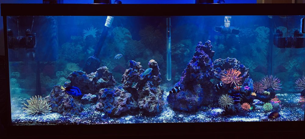 Blureef Aquarium: 2198 Flatbush Ave, Brooklyn, NY