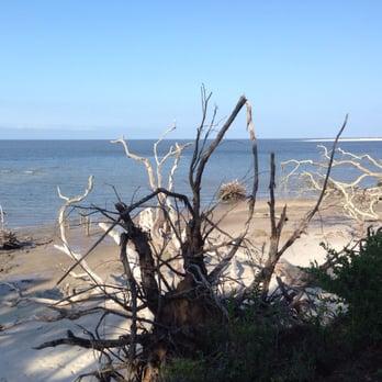 Photo Of Talbot Island State Park Jacksonville Fl United States Boneyard