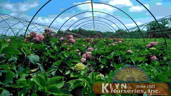Photo Of Klyn Nurseries Perry Oh United States Inc