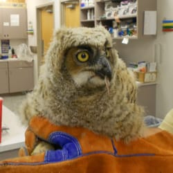 Morrison Animal Hospital 12 Reviews Veterinarians 33607 Ford Rd Garden City Mi United