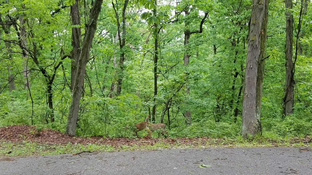 Social Spots from Thousand Hills State Park