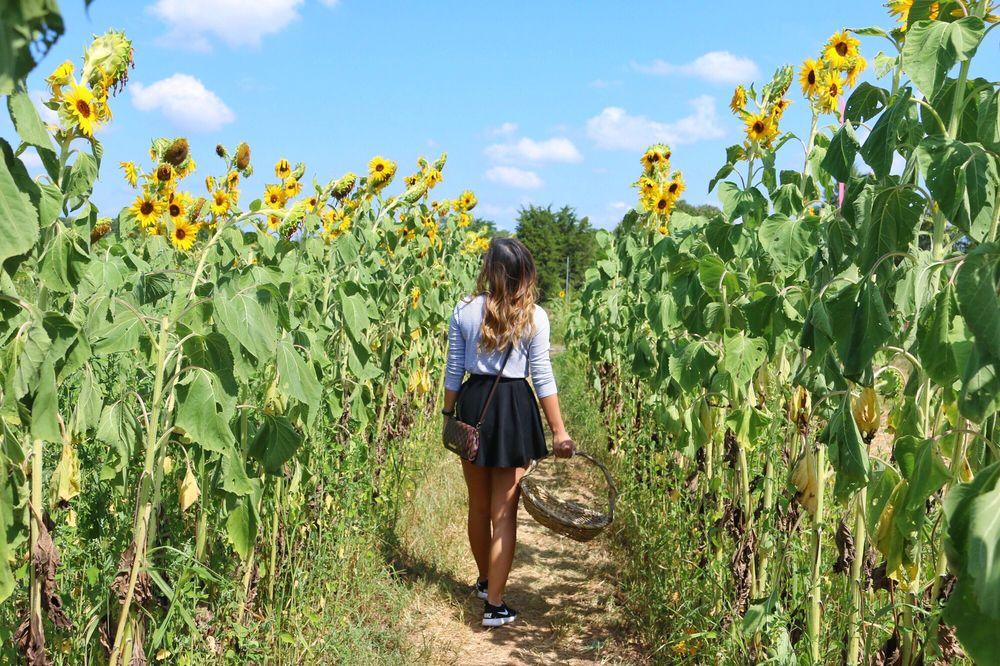 Burnside Farms - Nokesville: 11008 Kettle Run Rd, Nokesville, VA