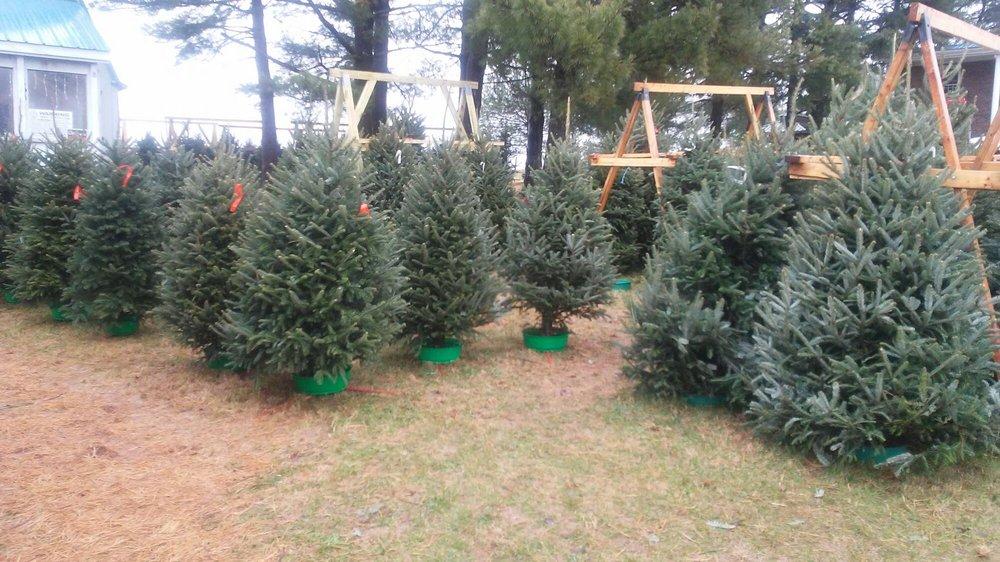 Werkmeister Christmas Tree Farm