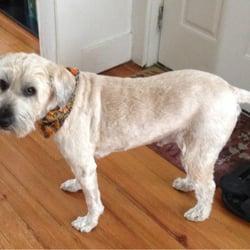 Mobile Dog Grooming Ma