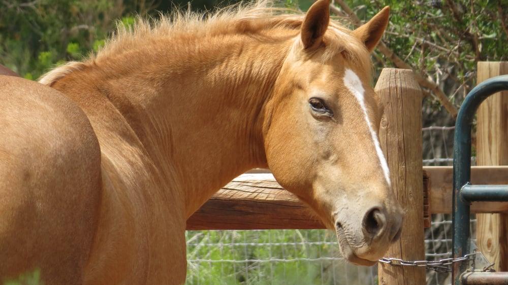 Healing Through Horses: 21074A Hwy, Abiquiu, NM